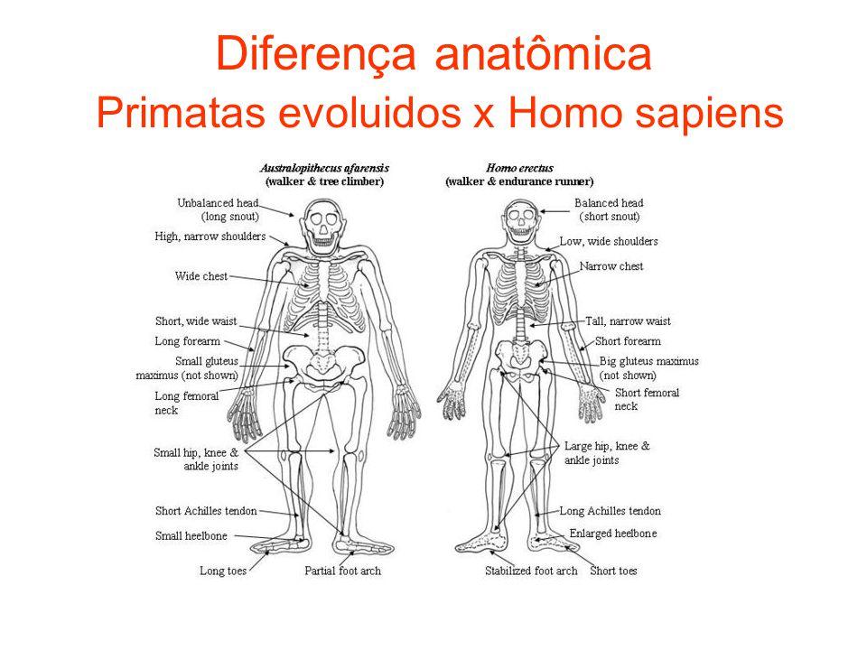 Diferença anatômica Primatas evoluidos x Homo sapiens