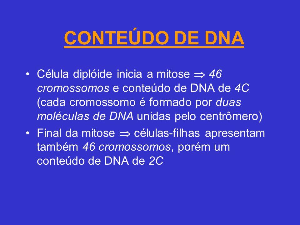 CONTEÚDO DE DNA