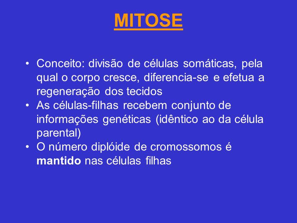 MITOSE Conceito: divisão de células somáticas, pela qual o corpo cresce, diferencia-se e efetua a regeneração dos tecidos.