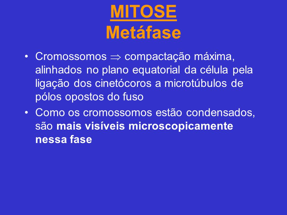MITOSE Metáfase