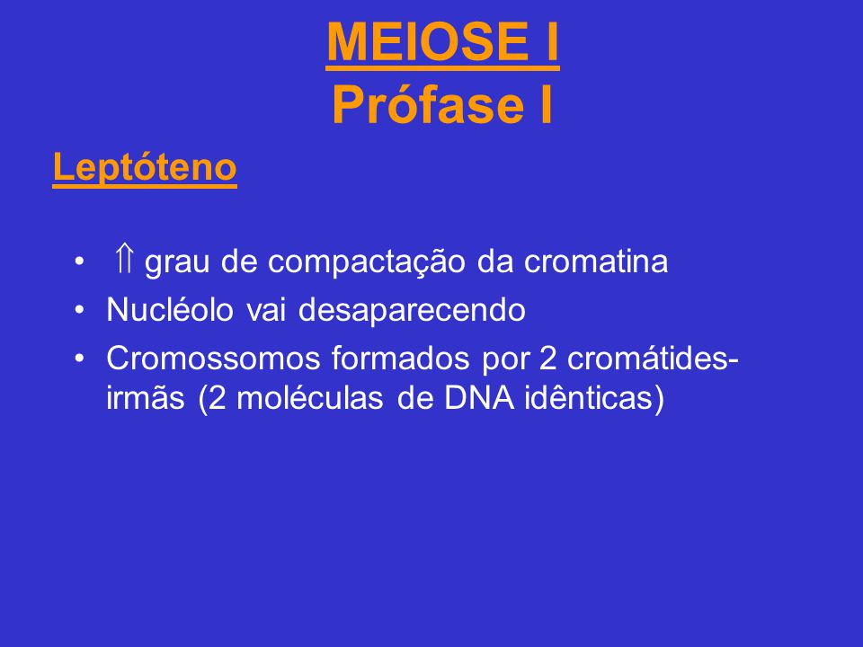 MEIOSE I Prófase I Leptóteno  grau de compactação da cromatina