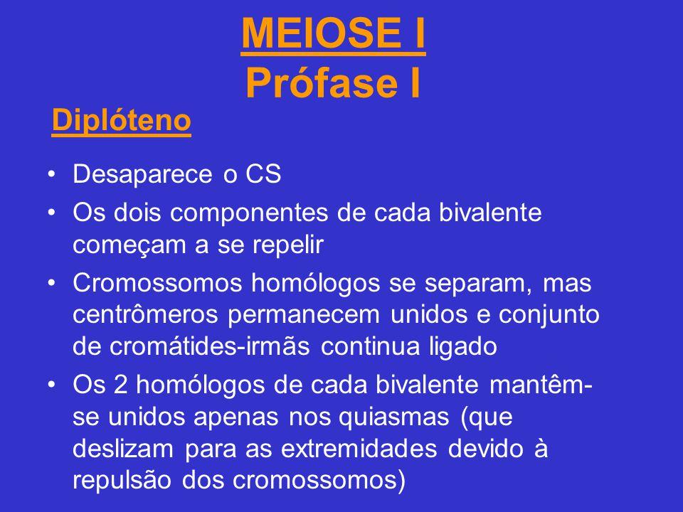 MEIOSE I Prófase I Diplóteno Desaparece o CS