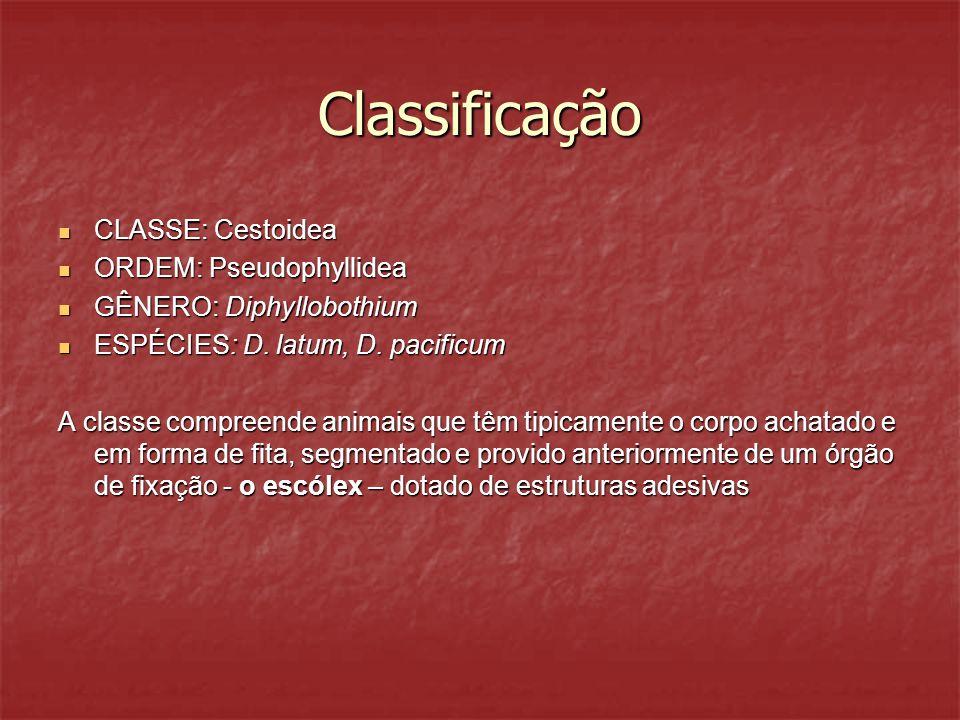 Classificação CLASSE: Cestoidea ORDEM: Pseudophyllidea