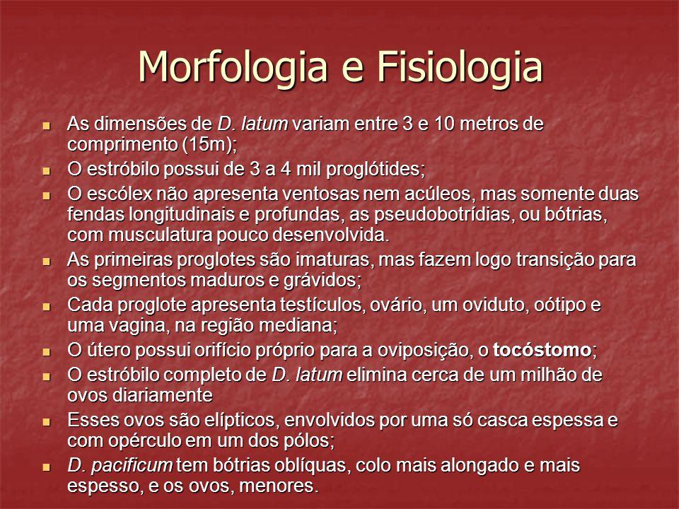 Morfologia e Fisiologia