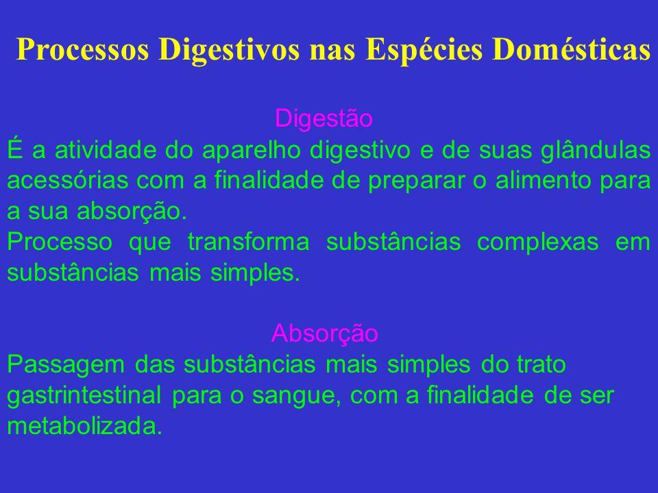 Processos Digestivos nas Espécies Domésticas