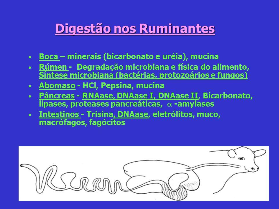 Digestão nos Ruminantes
