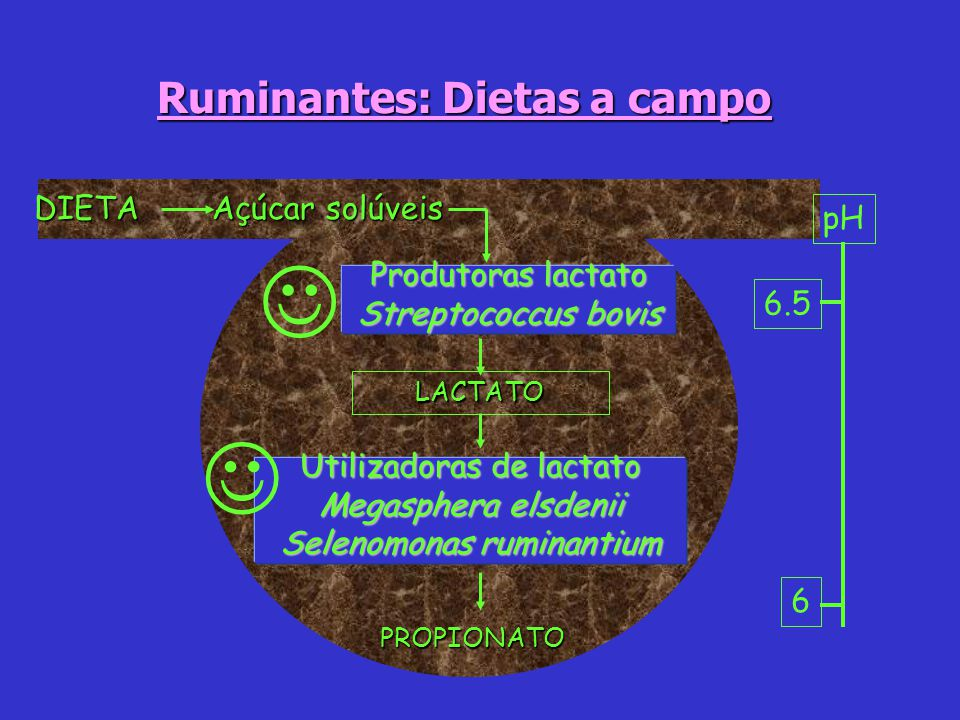 Ruminantes: Dietas a campo