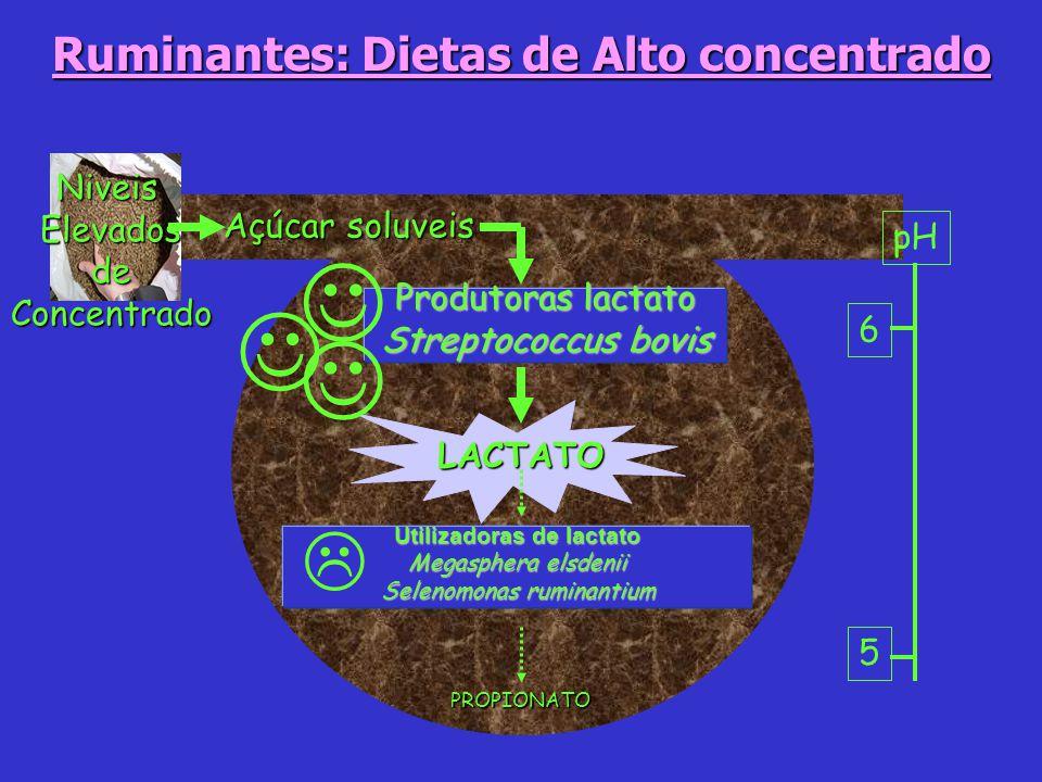 Ruminantes: Dietas de Alto concentrado Utilizadoras de lactato