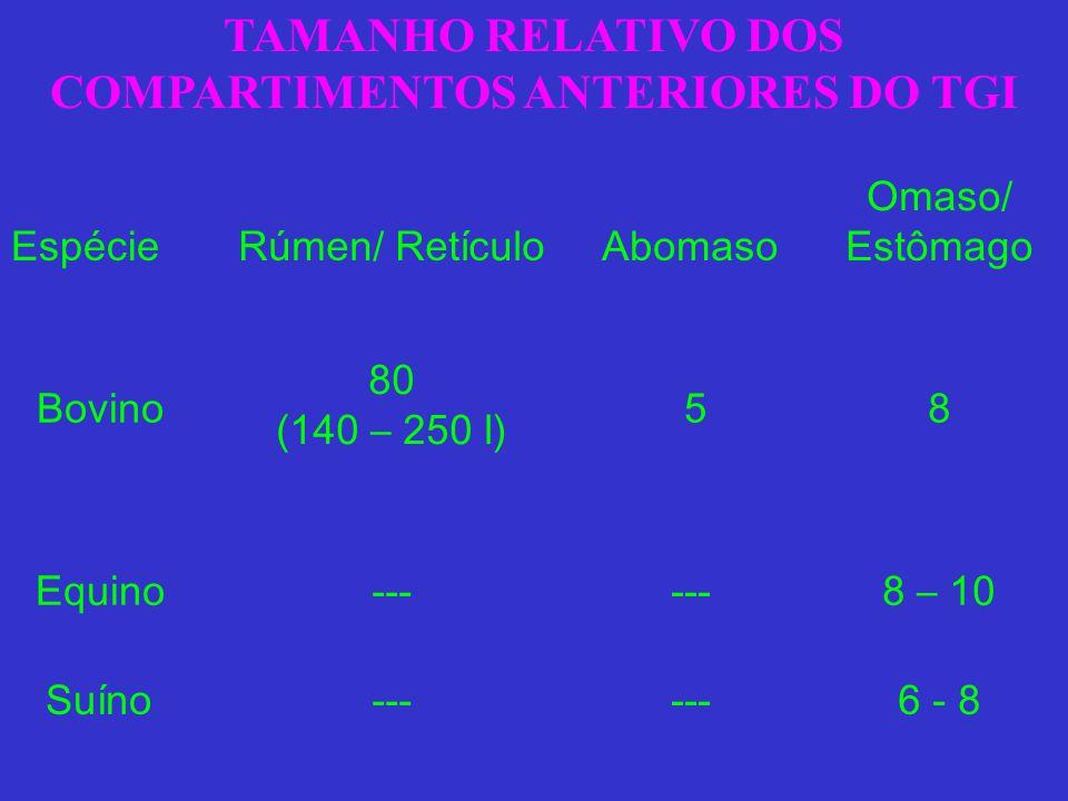 TAMANHO RELATIVO DOS COMPARTIMENTOS ANTERIORES DO TGI