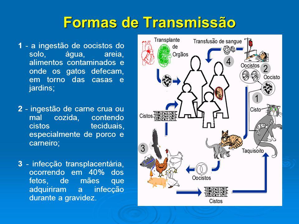 Formas de Transmissão 1 - a ingestão de oocistos do solo, água, areia, alimentos contaminados e onde os gatos defecam, em torno das casas e jardins;