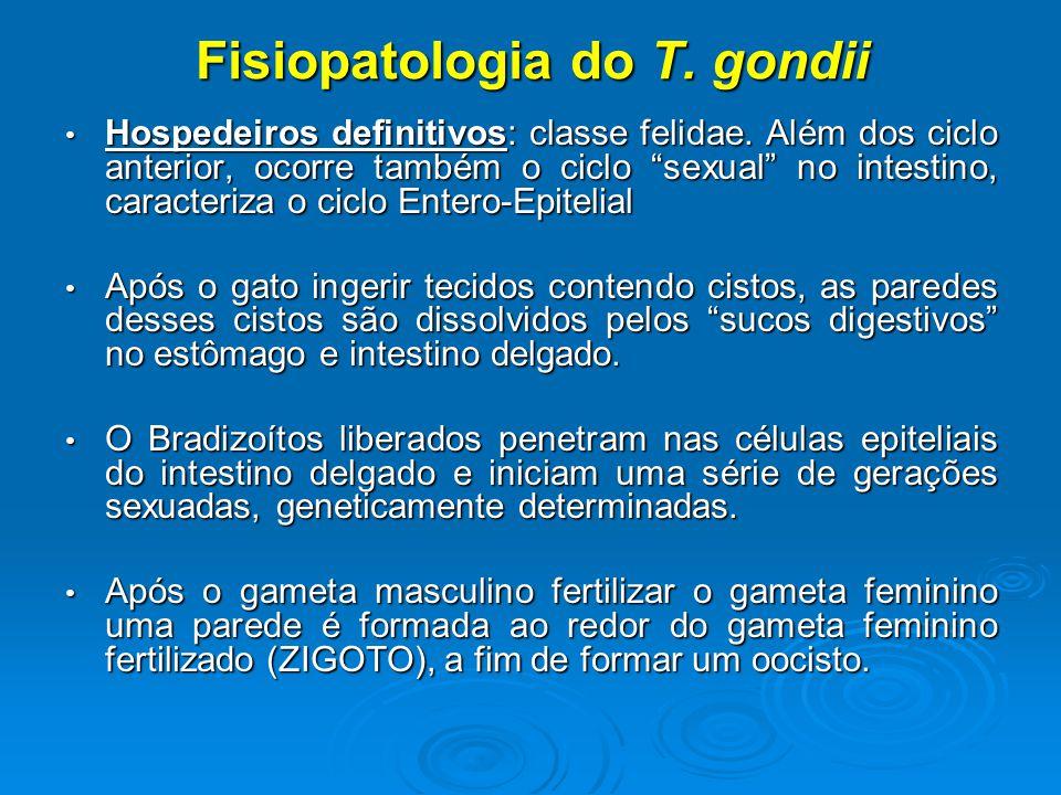 Fisiopatologia do T. gondii