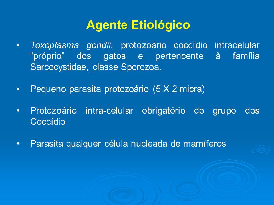 Agente Etiológico Toxoplasma gondii, protozoário coccídio intracelular próprio dos gatos e pertencente à família Sarcocystidae, classe Sporozoa.