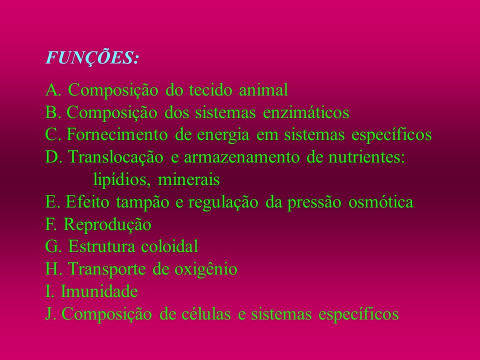 FUNÇÕES: A. Composição do tecido animal. B. Composição dos sistemas enzimáticos. C. Fornecimento de energia em sistemas específicos.