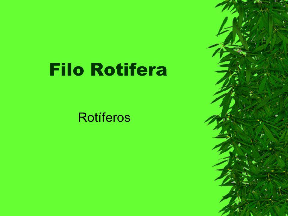 Filo Rotifera Rotíferos