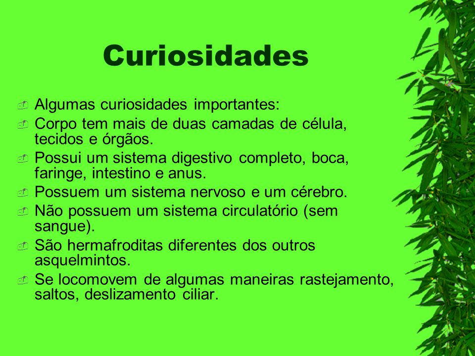 Curiosidades Algumas curiosidades importantes: