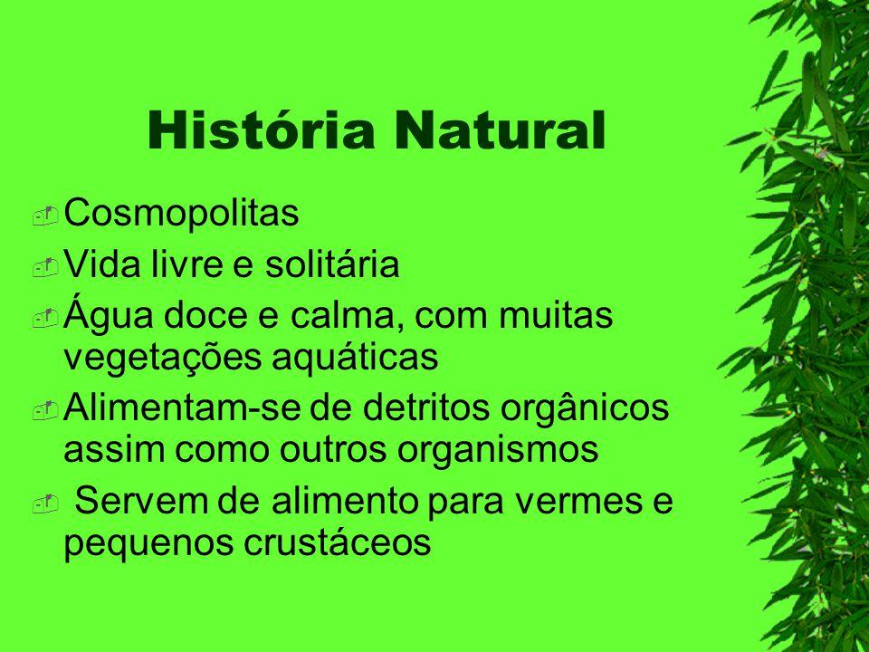 História Natural Cosmopolitas Vida livre e solitária