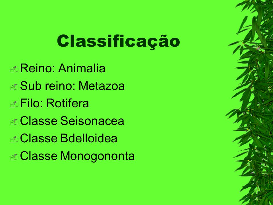 Classificação Reino: Animalia Sub reino: Metazoa Filo: Rotifera