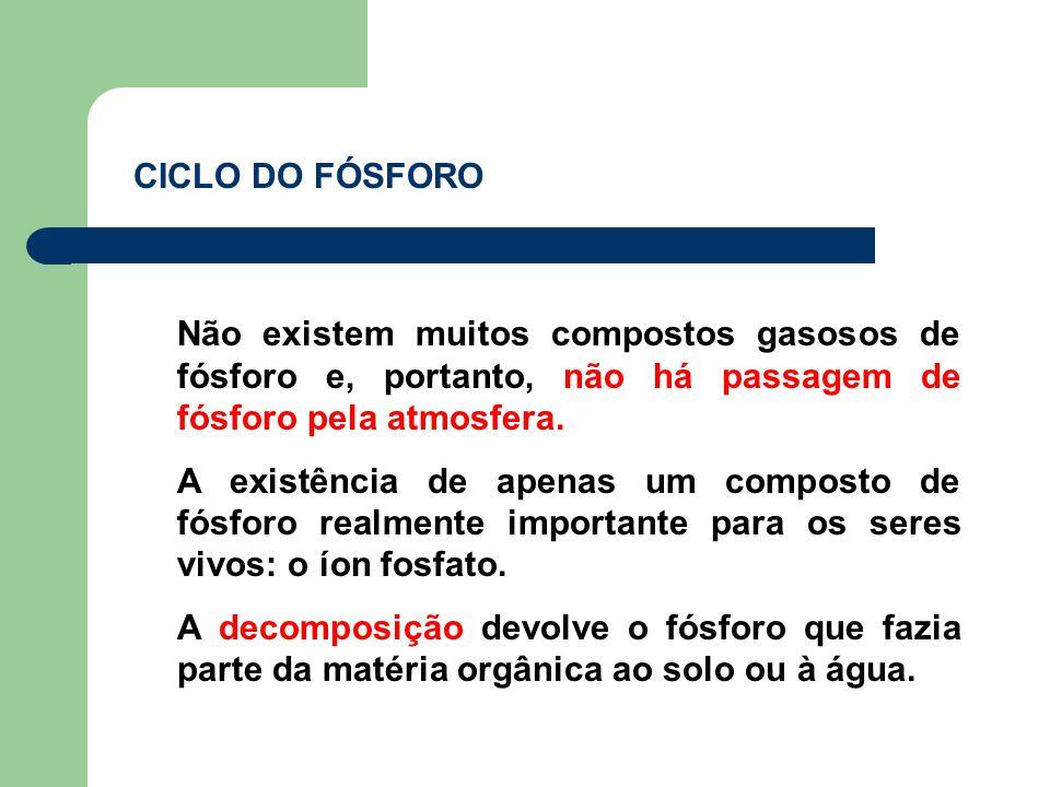 CICLO DO FÓSFORO Não existem muitos compostos gasosos de fósforo e, portanto, não há passagem de fósforo pela atmosfera.