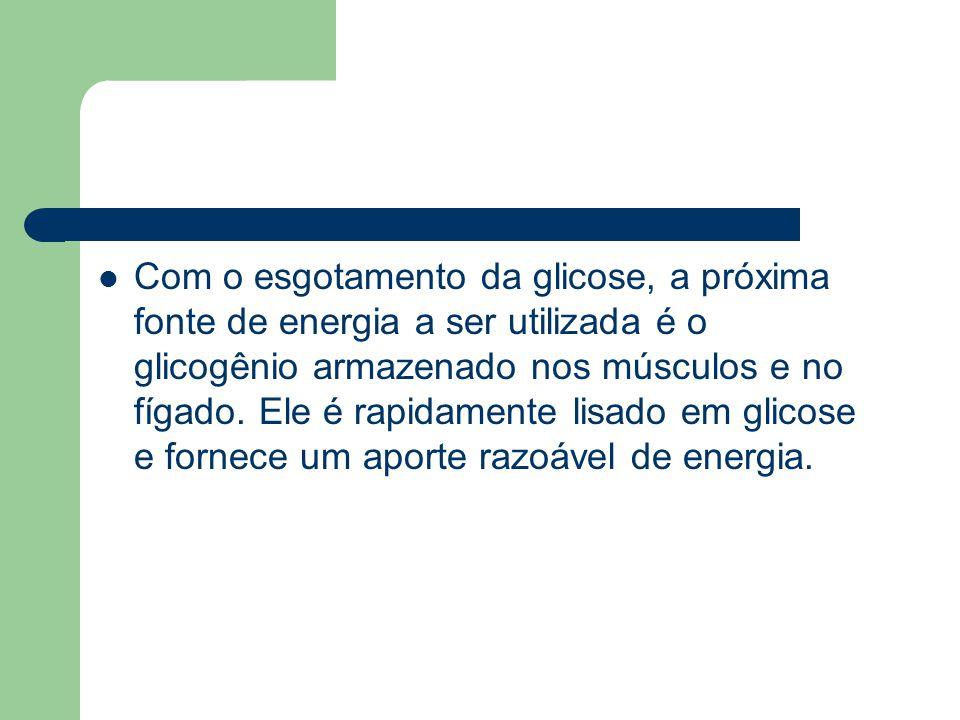Com o esgotamento da glicose, a próxima fonte de energia a ser utilizada é o glicogênio armazenado nos músculos e no fígado.