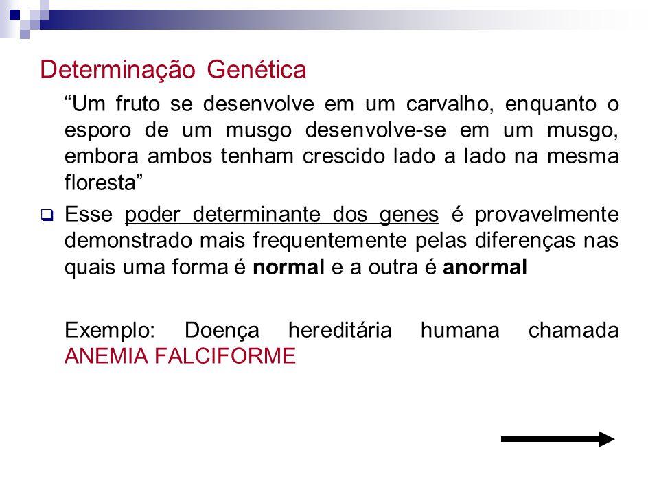 Determinação Genética