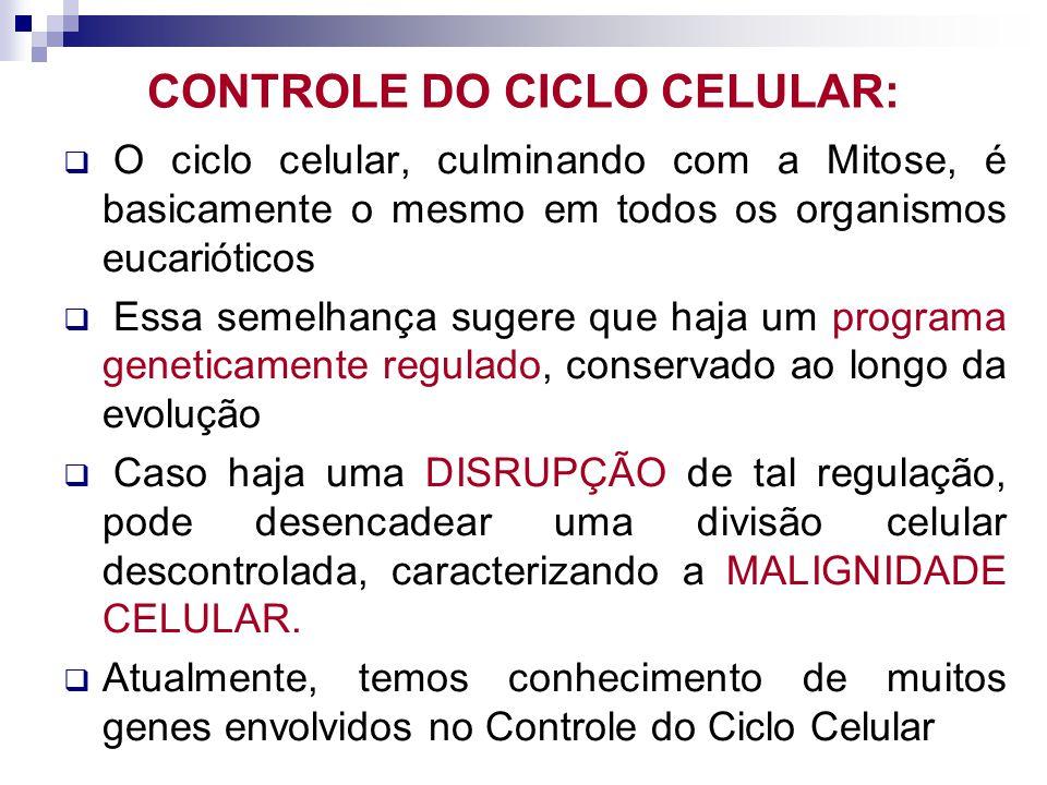CONTROLE DO CICLO CELULAR: