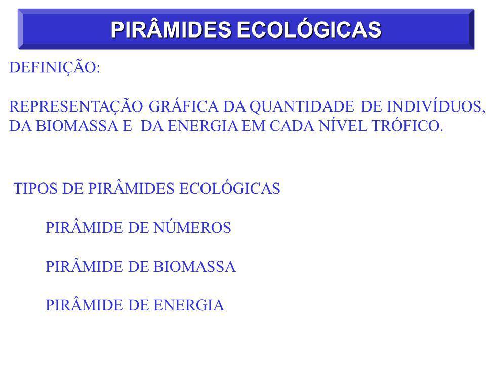 PIRÂMIDES ECOLÓGICAS DEFINIÇÃO:
