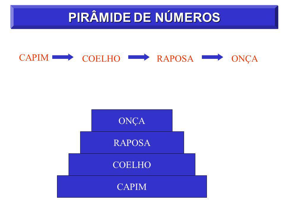 PIRÂMIDE DE NÚMEROS CAPIM COELHO RAPOSA ONÇA ONÇA RAPOSA COELHO CAPIM