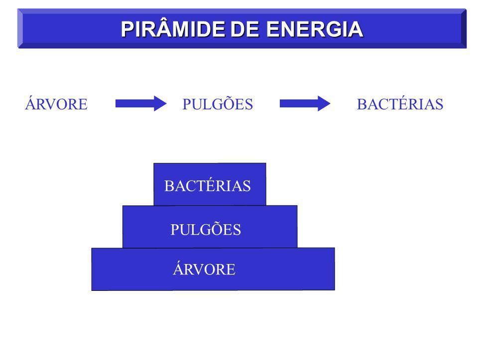 PIRÂMIDE DE ENERGIA ÁRVORE PULGÕES BACTÉRIAS BACTÉRIAS PULGÕES ÁRVORE