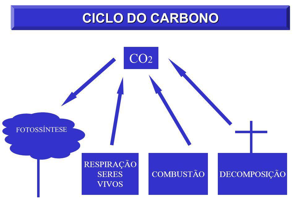 CICLO DO CARBONO CO2 DECOMPOSIÇÃO COMBUSTÃO RESPIRAÇÃO SERES VIVOS