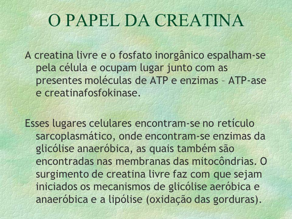 O PAPEL DA CREATINA