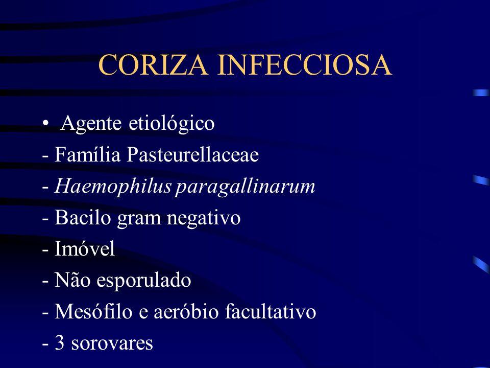 CORIZA INFECCIOSA Agente etiológico - Família Pasteurellaceae