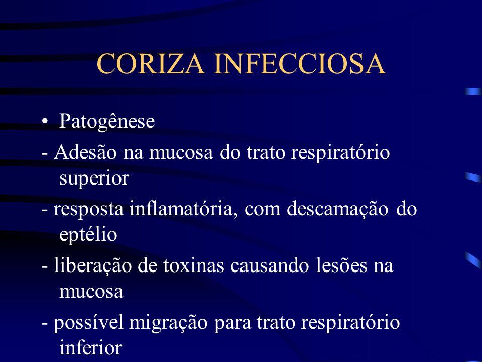 CORIZA INFECCIOSA Patogênese