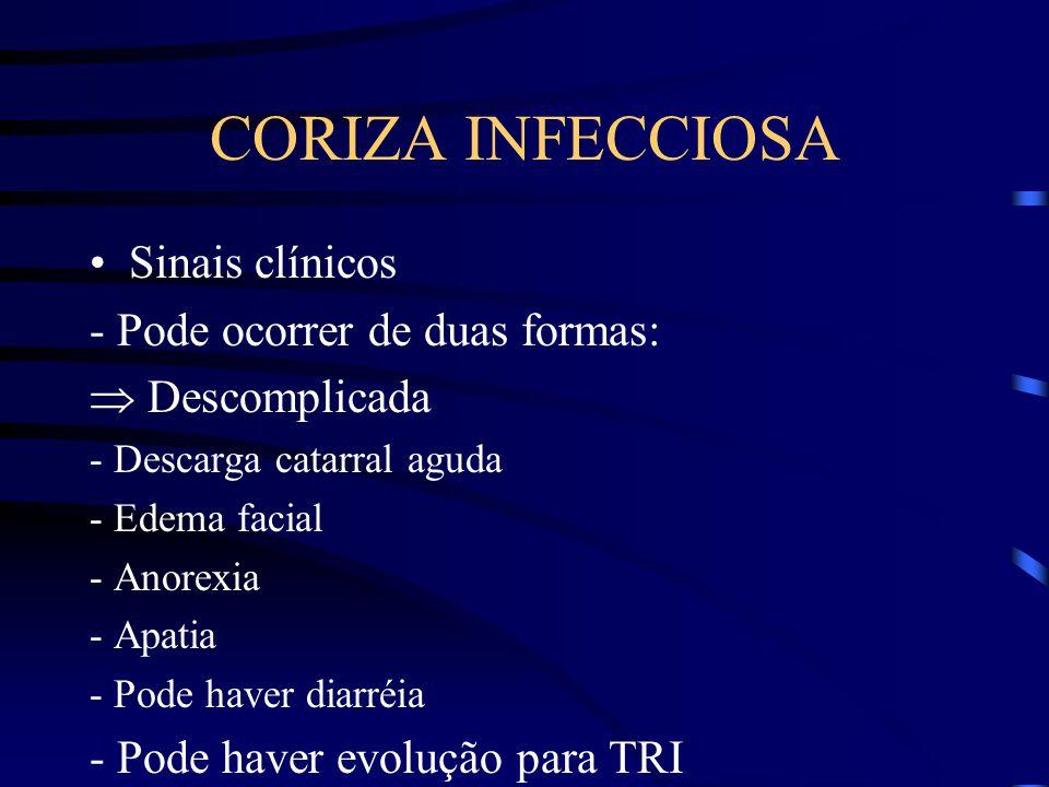 CORIZA INFECCIOSA Sinais clínicos - Pode ocorrer de duas formas: