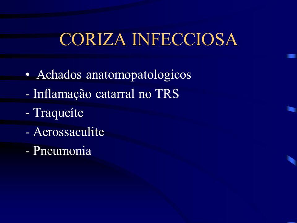 CORIZA INFECCIOSA Achados anatomopatologicos