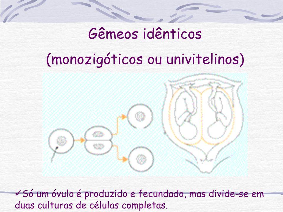 (monozigóticos ou univitelinos)