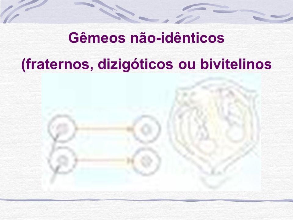 (fraternos, dizigóticos ou bivitelinos