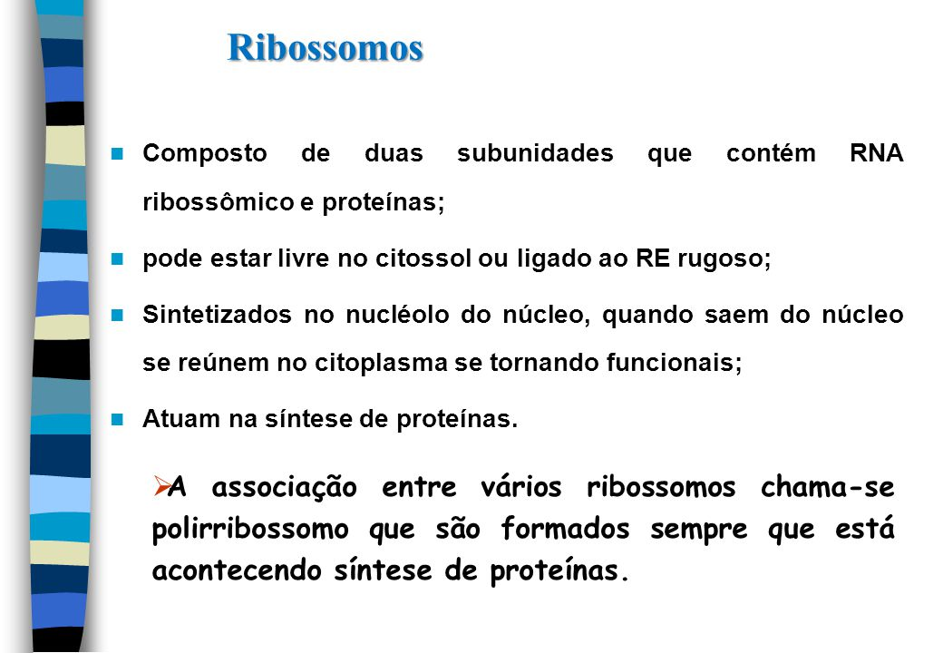 Ribossomos Composto de duas subunidades que contém RNA ribossômico e proteínas; pode estar livre no citossol ou ligado ao RE rugoso;