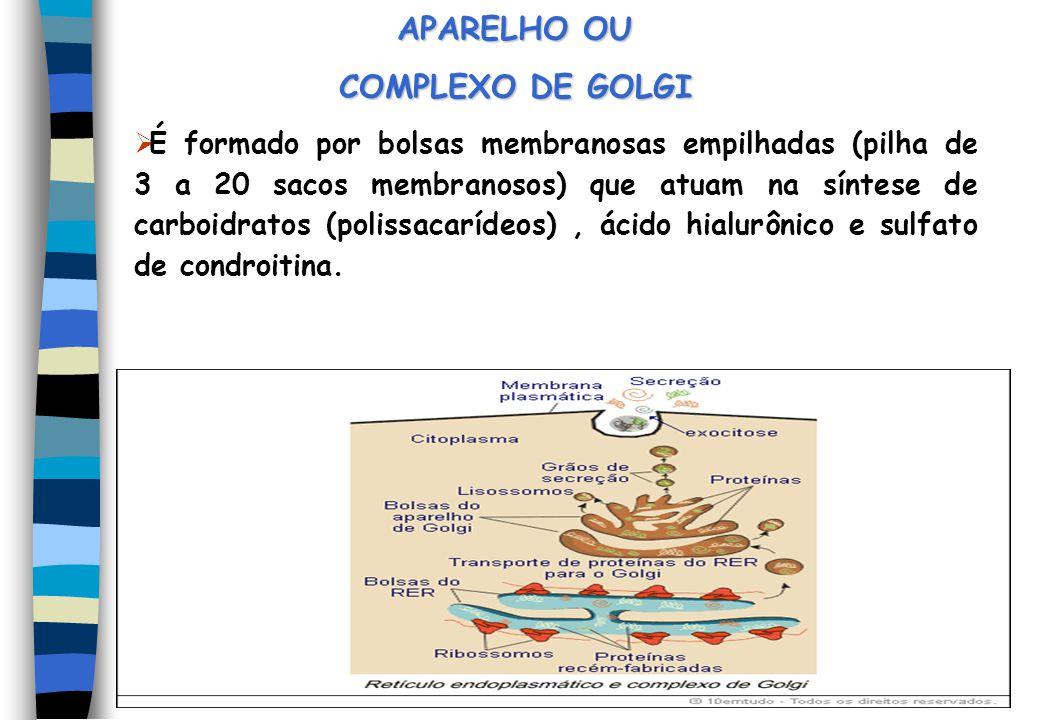 APARELHO OU COMPLEXO DE GOLGI