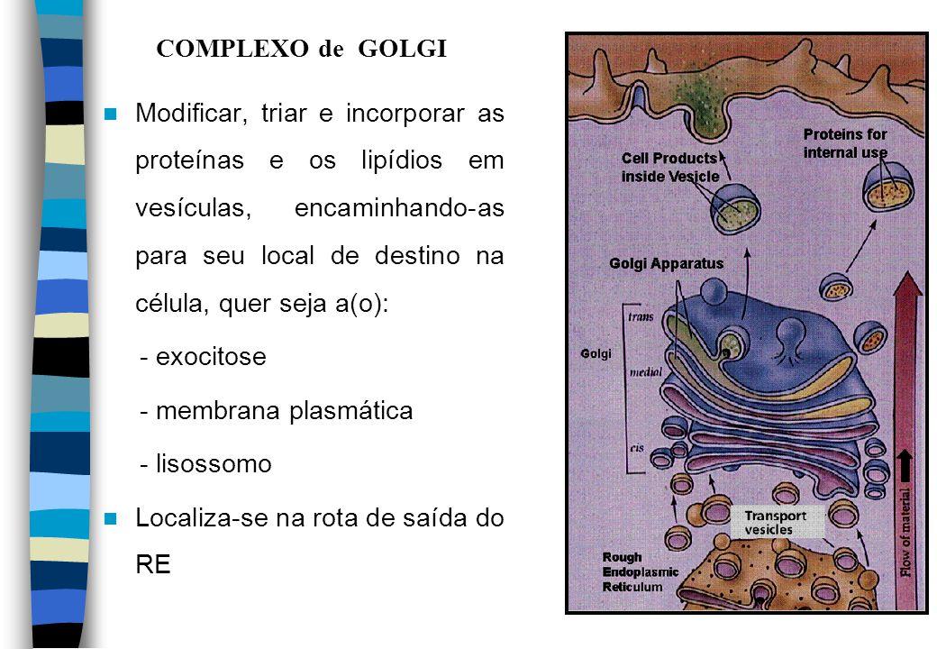 COMPLEXO de GOLGI
