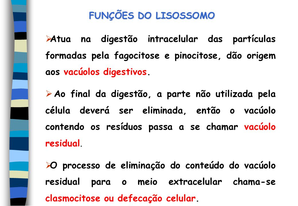 FUNÇÕES DO LISOSSOMO Atua na digestão intracelular das partículas formadas pela fagocitose e pinocitose, dão origem aos vacúolos digestivos.