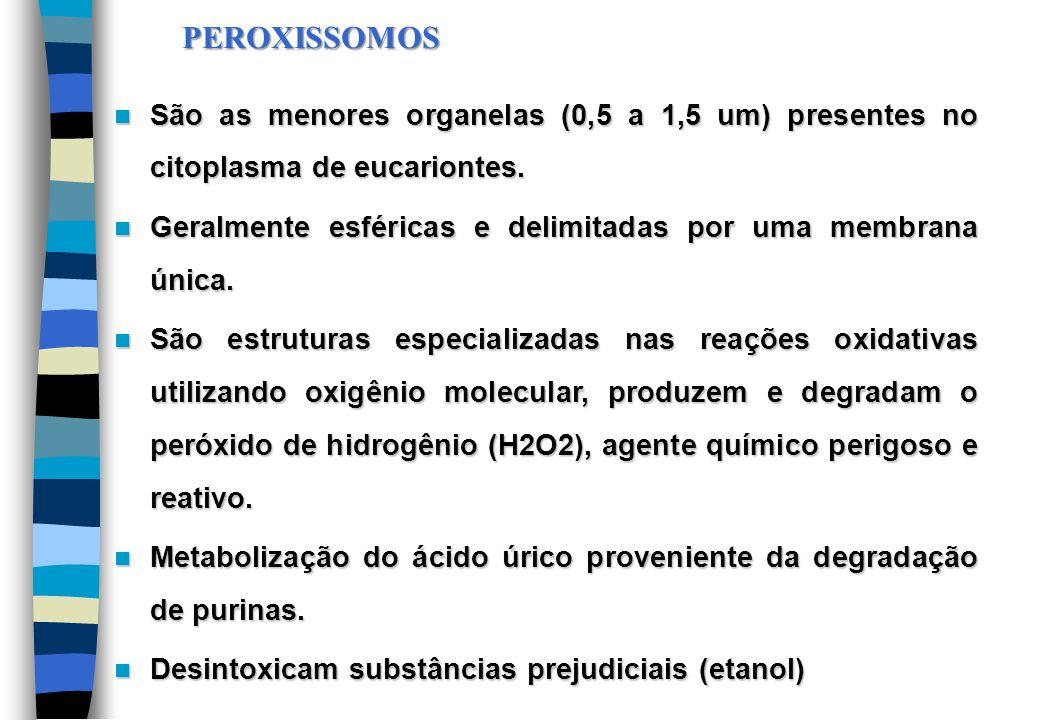 PEROXISSOMOS São as menores organelas (0,5 a 1,5 um) presentes no citoplasma de eucariontes.