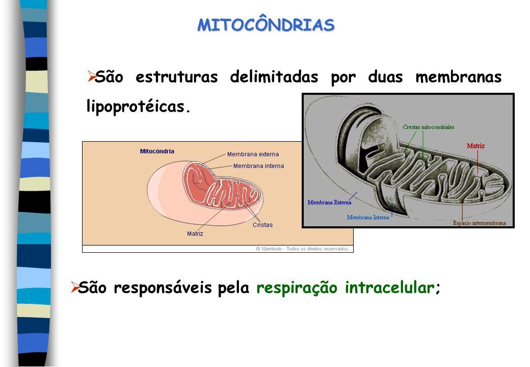 MITOCÔNDRIAS São estruturas delimitadas por duas membranas lipoprotéicas.