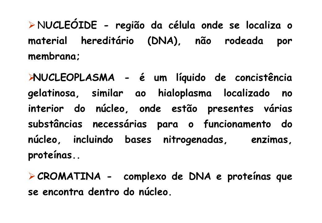 NUCLEÓIDE - região da célula onde se localiza o material hereditário (DNA), não rodeada por membrana;