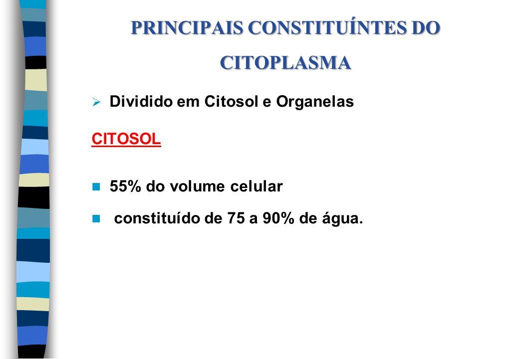 PRINCIPAIS CONSTITUÍNTES DO CITOPLASMA