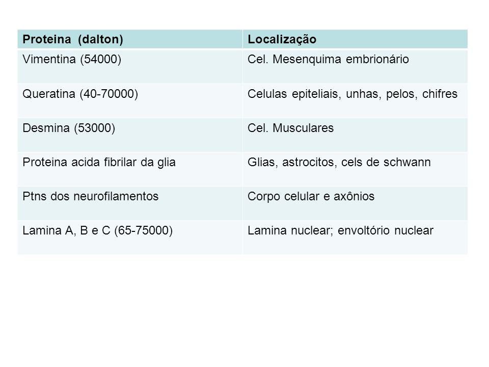 Proteina (dalton) Localização. Vimentina (54000) Cel. Mesenquima embrionário. Queratina (40-70000)