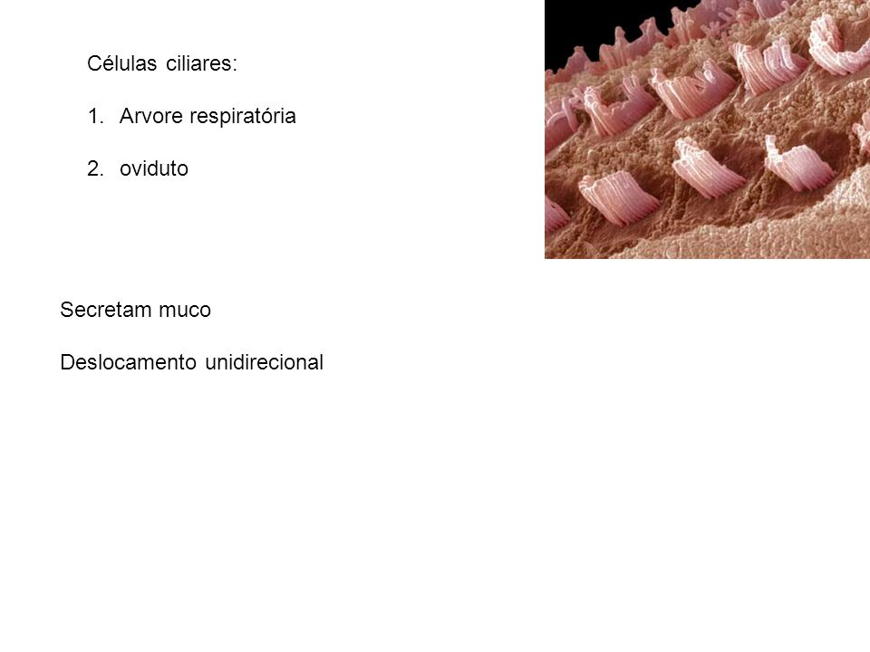 Células ciliares: Arvore respiratória oviduto Secretam muco Deslocamento unidirecional