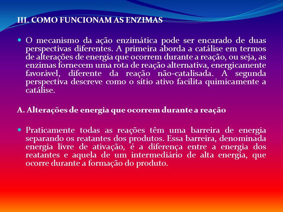 III. COMO FUNCIONAM AS ENZIMAS