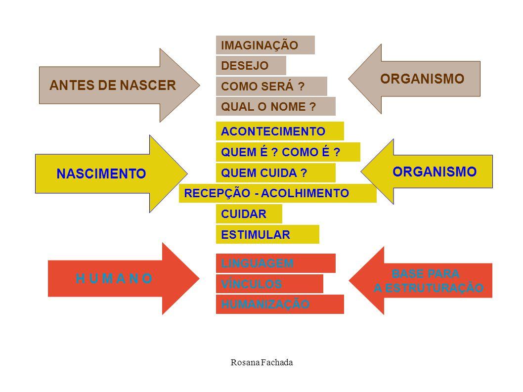 ORGANISMO ANTES DE NASCER NASCIMENTO ORGANISMO H U M A N O
