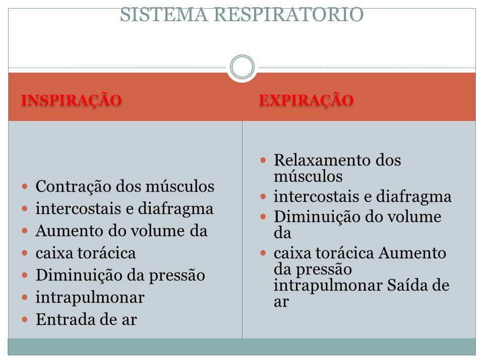 SISTEMA RESPIRATORIO Relaxamento dos músculos Contração dos músculos