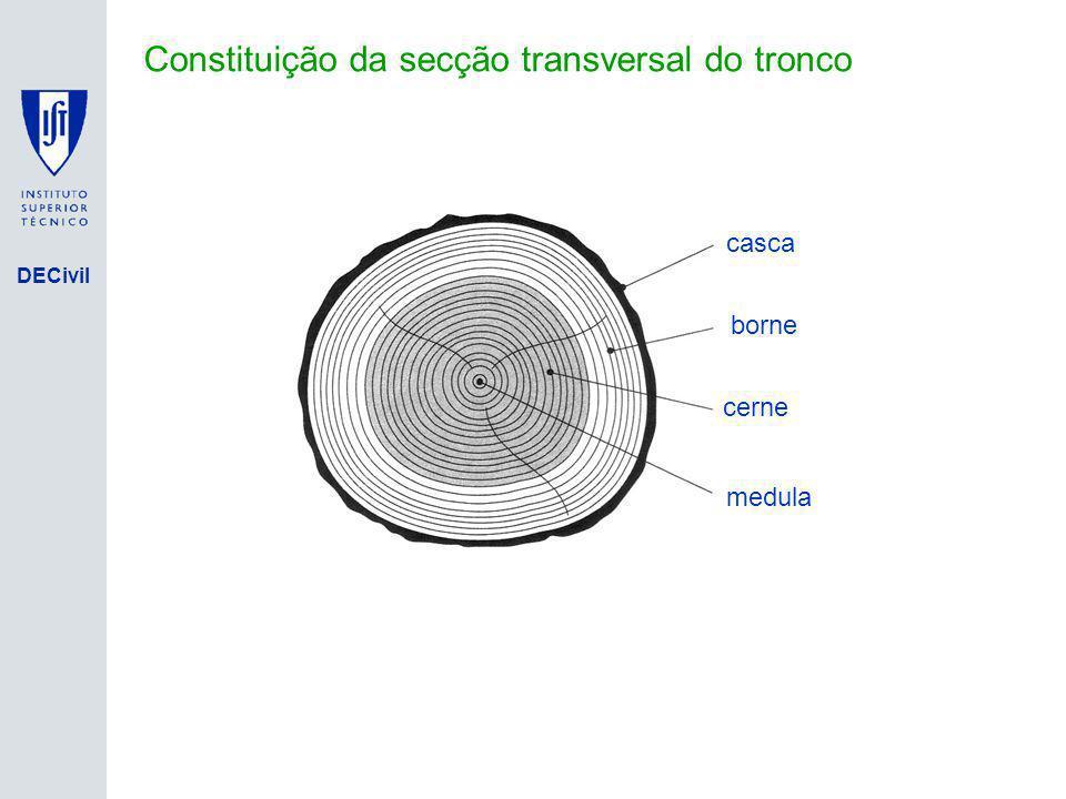 Constituição da secção transversal do tronco